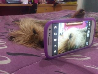 Hora do selfie