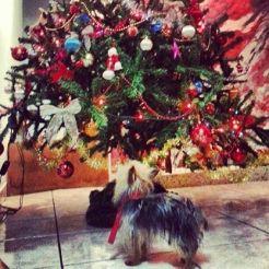 Dando as boas vindas ao espírito natalino (1 de dezembro de 2013)